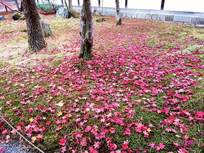 清凉寺の紅葉