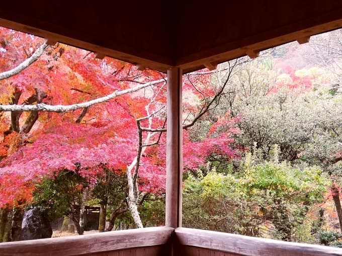 嵐山公園の紅葉