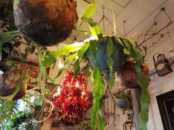 天井から植物がぶら下がる、バリフォーシーズンズの店内