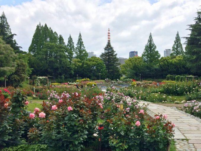 靱公園のバラ園