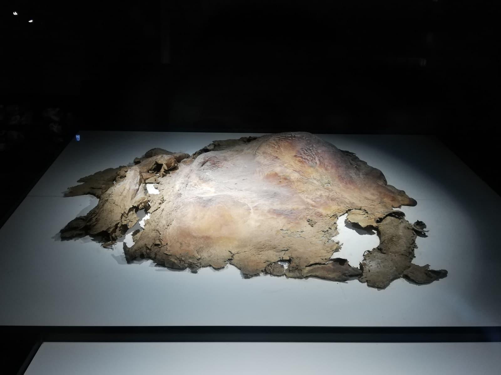 マンモスの皮膚の冷凍標本